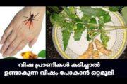 കടന്നൽ, തേനീച്ച, ചിലന്തി, പഴുതാര, എന്നിവ പോലെയുള്ള കടിച്ചാൽ|| Natural Remedy for Insect Bites