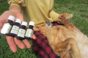 Natural Flea & Tick Repellent for Dogs – Natural Remedy!