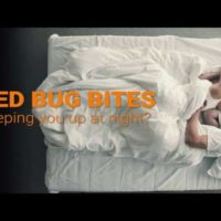 Effective Natural Remedy For Bed Bugs And Their Bites